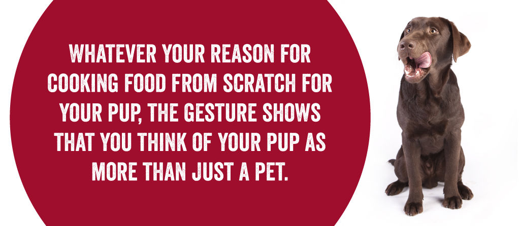 Whatever your reason for cooking food from scratch for your pup, the gesture shows that you think of your pup as more than just a pet.