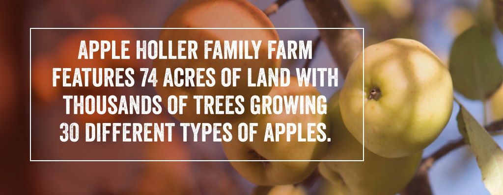Apple Holler Family Farm Features 74 acres of land.