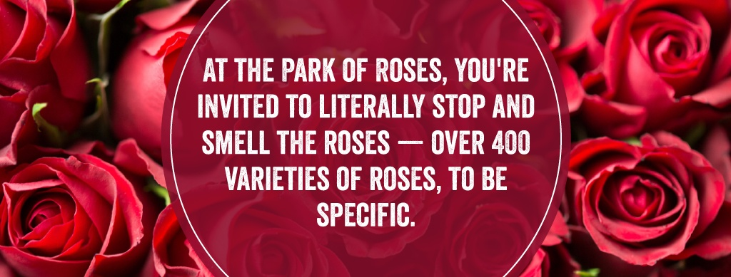 3-rose-garden