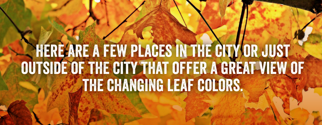 Here are a few places in the city or just outside of the city that offer a great view of the changing leaf colors.