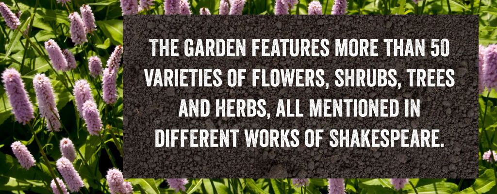 The Shakespeare Garden features many flowers, shrubs and herbs - all of which have been discussed in works of Shakespeare